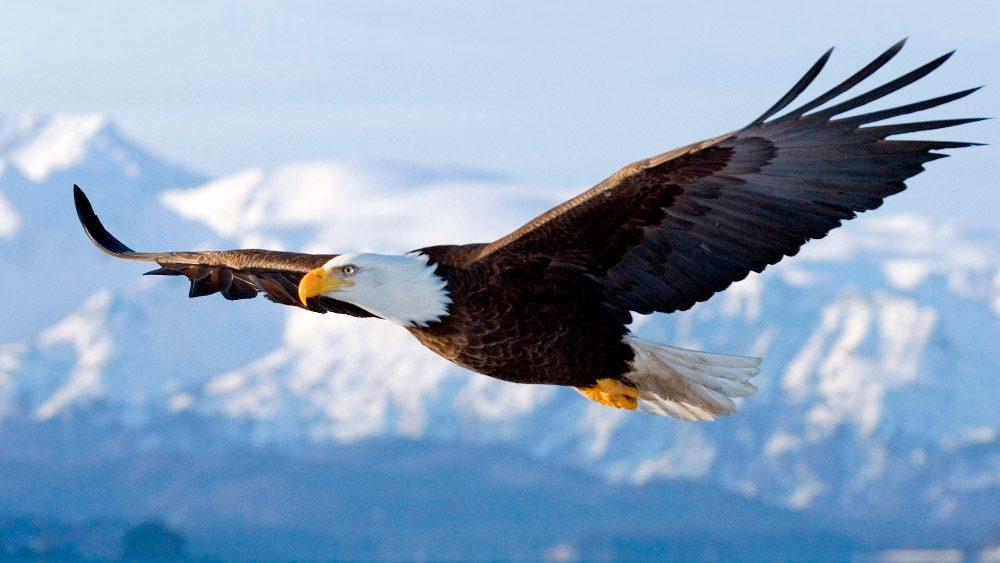 Fe del Águila